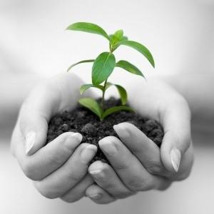 Il Socially Responsible Investing: Cosa Sapere