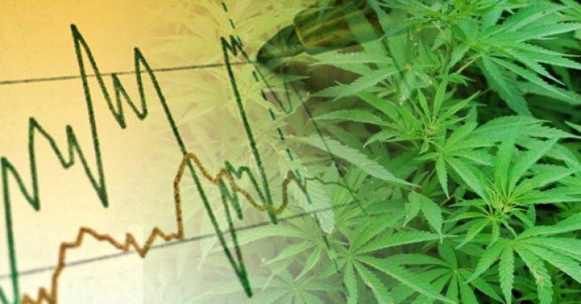 Perché Investire in Cannabis